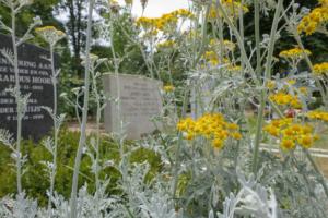 Using perennials in cemeteries