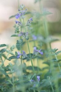 Perennials have ways of tolerating extreme weather