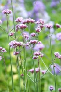 Flowering garden plants