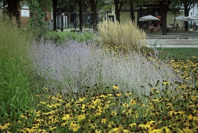 Perennials add colour to public green spaces image