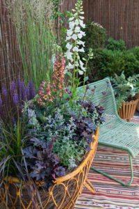 Perennials in pots