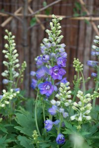 What are perennials?
