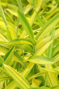 garden foliage plants