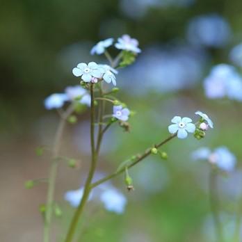 Top 10 shade plants image
