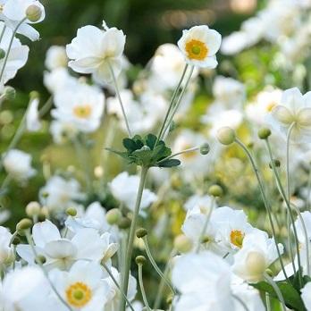 Perennials at their prettiest image