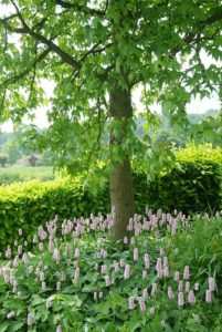 Perennials in public green spaces