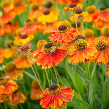 Fiery coloured border plants image
