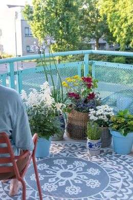 Balcony plants can put a smile on your face