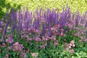 Perennials deserve a place in spatial plans