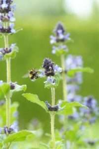 Plant perennials and turn your garden into a haven for bees