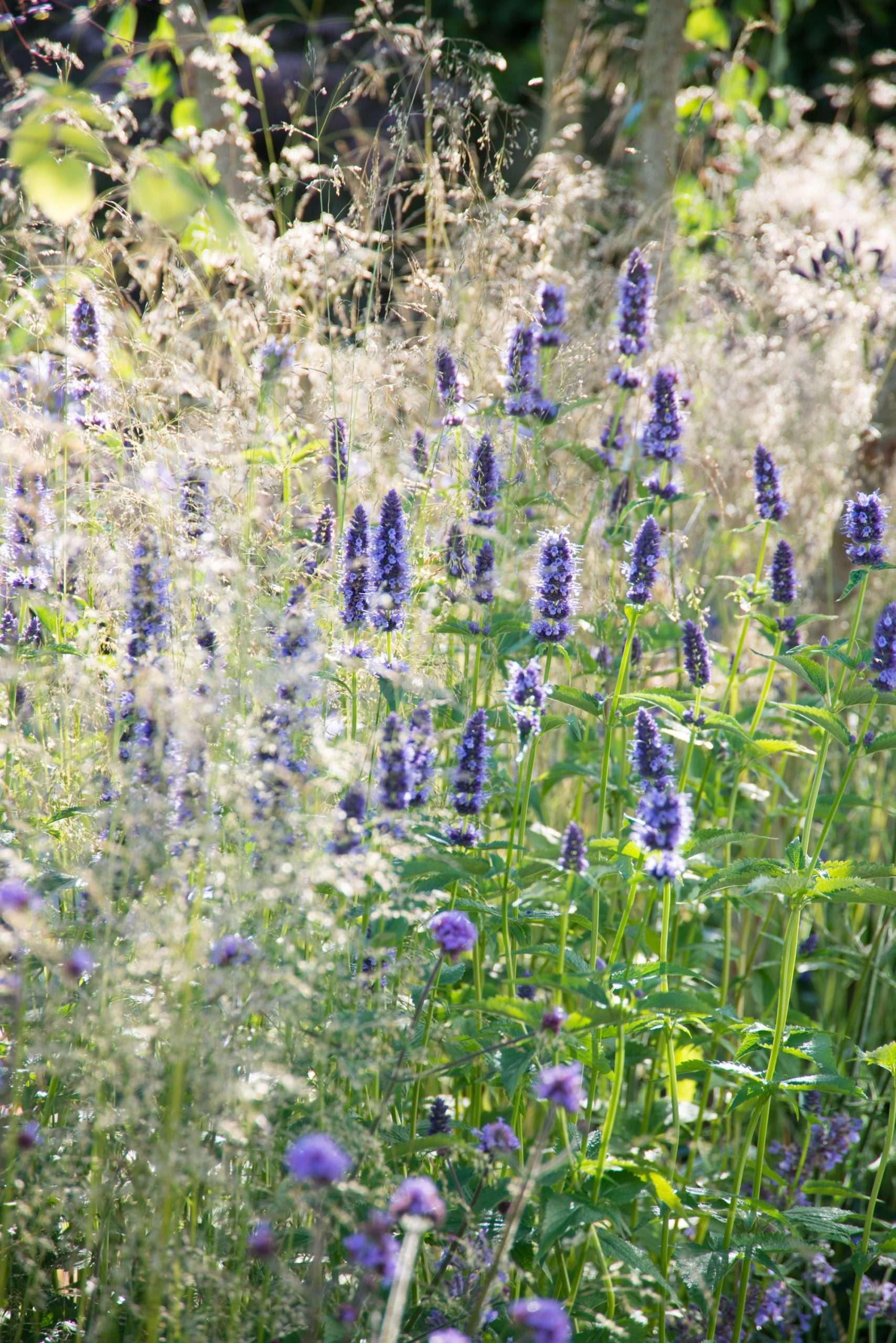 New garden trend: herbaceous perennials