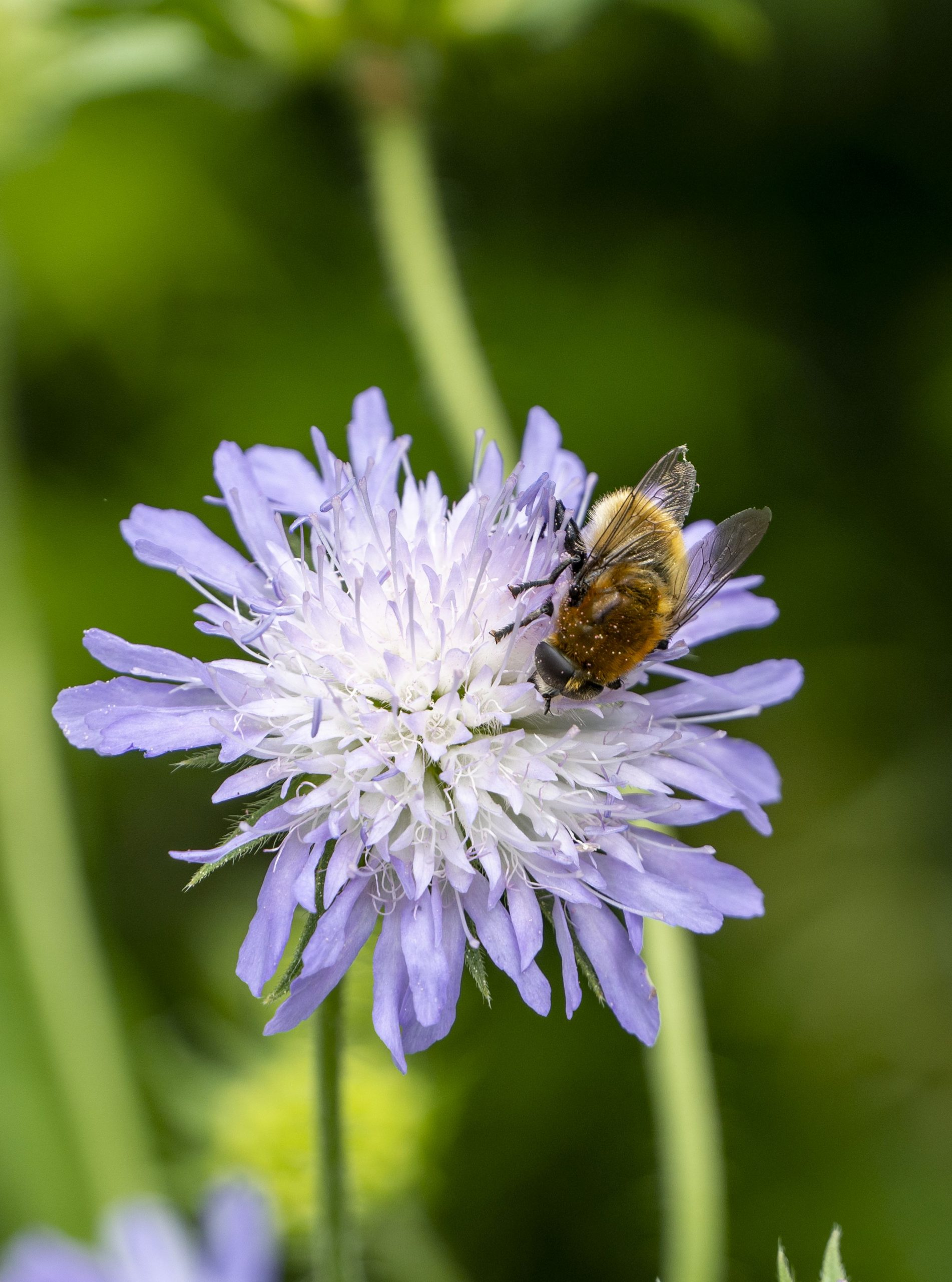 Perennials are brilliant for biodiversity: they welcome butterflies, bees & birds with open arms!